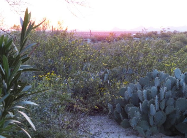 Dusk in the Sonoran Desert