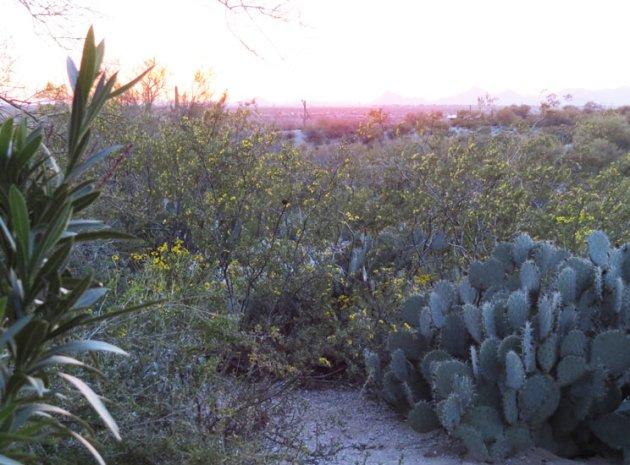 Dusk in the Sonoran Desert